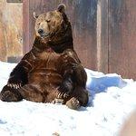 Foto de Montana Grizzly Encounter