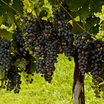 We grow, produce and bottle all over wines with over 9 different varietals