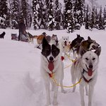 Photo opp of a great adventure! Adored the dogs.