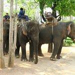 At Taweechai Elephant Camp - Kanchanaburi, Thailand (06/Apr/17).
