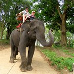 Elephant trekking - Taweechai Elephant Camp (06/Apr/17).