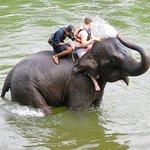 Elephants having fun at Taweechai Elephant Camp - Thailand (06/Apr/17).