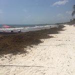 Photo of Playa Paraiso
