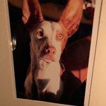 Foto di The Dogs