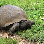 Tortugas en libertad Reserva El Chato