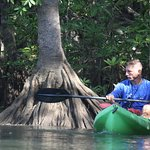 Our guide explaining this specific mangrove