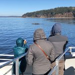 Gray whale sighting 3/11/18
