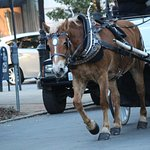 Horse carriages are available in the area