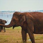 Einige Eindrücke von der Reise mit Blessrilanka Tours. Wir haben es sehr genossen.