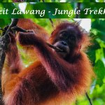Photo of Bukit Lawang - Jungle Trekking Sumatra