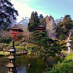 A shot of the Japanese Tea garden