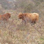 Nature Reserve of Westhoek
