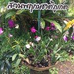 Photo of Phuket Orchid Farm