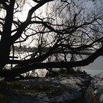 Pickmere Lake