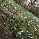 Photo of Oxford University Parks