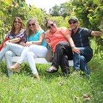 Tour do Vinho: passeio nos vinhedos e adega, produção do vinho e degustação.