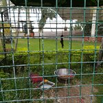 20180312_163657_large.jpg