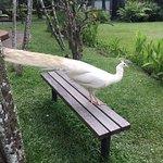 Bali Trip Driver照片