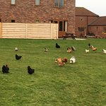 Foto de Grange Farm Park