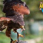 Photo of Les Aigles de Valmy