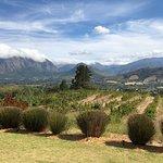 Dieu Donne Vineyards & Views Foto