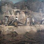 Photo de Monterey Bay Aquarium