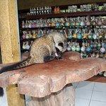Foto de Bali Traditional Tours - Day Tours