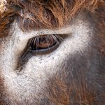 Foto di Antigua's Donkey Sanctuary