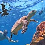 Photo of Mystic Snorkel