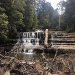 Foto de Liffey Falls
