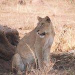 Foto de Bwindi Impenetrable National Park