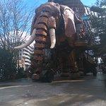 La sortie de l'éléphant