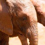 David Sheldrick Wildlife Trust's babies