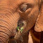 Foto de David Sheldrick Wildlife Trust