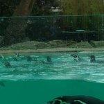 Photo de ZSL London Zoo