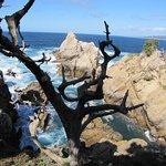 Point Lobos Foto