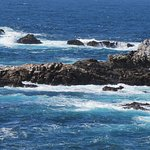Seals on the rocks at Pt. Lobos.