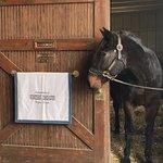 Foto de Kentucky Horse Park