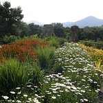 With the Blue Ridge Mountains as a backdrop, the N. C. Arboretum is ideally located.