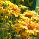 """Each flowering plant at the arboretum provides the possibility of a """"Kodak moment."""""""