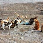 Zdjęcie Dipkarpaz Milli Parki - Karpaz National Park Wild Donkey Protection Area