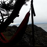 Lime Kiln Point Hammocking