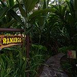 Frog garden at Mawamba Lodge