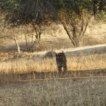 Photo of Ranthambore National Park