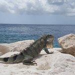 Foto de Blue Bay Curaçao Golf & Beach Resort