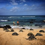 Honu and surfers at the beach. Please keep your distance and let the turtles rest.