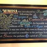 Mimosa history