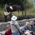 Eagle returns to park ranger in white hat