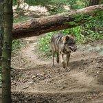 Wildpark Schwarze Berge-bild