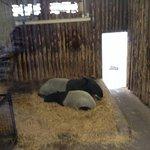 Edinburgh Zoo Foto